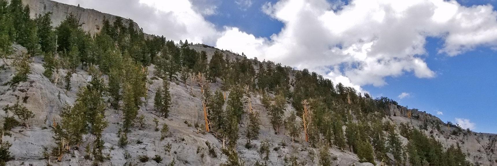 Mummy Mountain's Northern Cliffs   Mummy Mountain NNE, Mt. Charleston Wilderness, Nevada, Slide 026