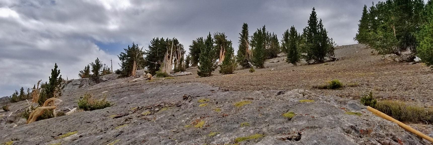 Looking Back South Toward Mummy Mountain Summit   Mummy Mountain Northern Rim Overlook, Spring Mountain Wilderness, Nevada