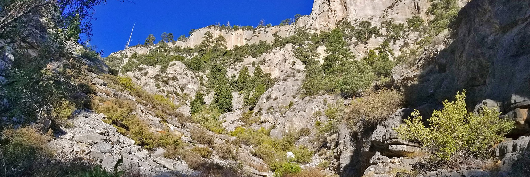 View Up Rocky Elevation Gain in Lower Robbers Roost Canyon   Fletcher Peak from Robbers Roost   Spring Mountains, Nevada