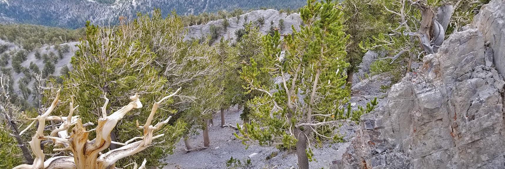 Potential Summit Approach Opening on Eastern Summit Cliffs   Mummy Mountain Northern Rim Overlook, Spring Mountain Wilderness, Nevada