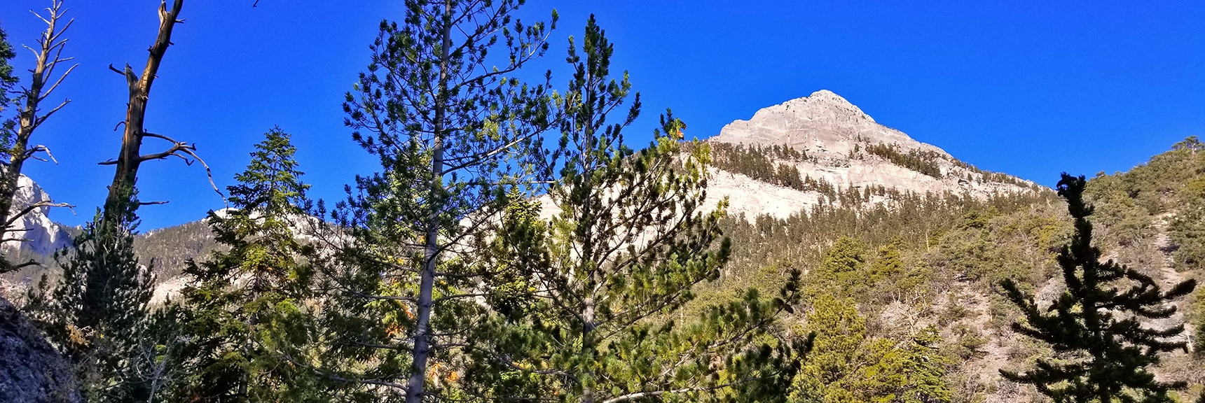 Mummy Mt. Head from Base of Canyon   Mummy Mountain's Head, Mt Charleston Wilderness, Spring Mountains, Nevada 009