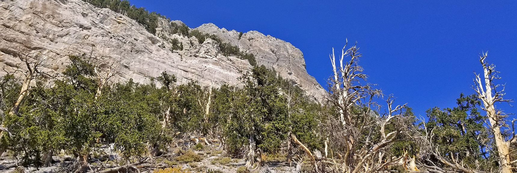 Approaching Mummy Mt. Head Cliffs   Mummy Mountain's Head, Mt Charleston Wilderness, Spring Mountains, Nevada 015