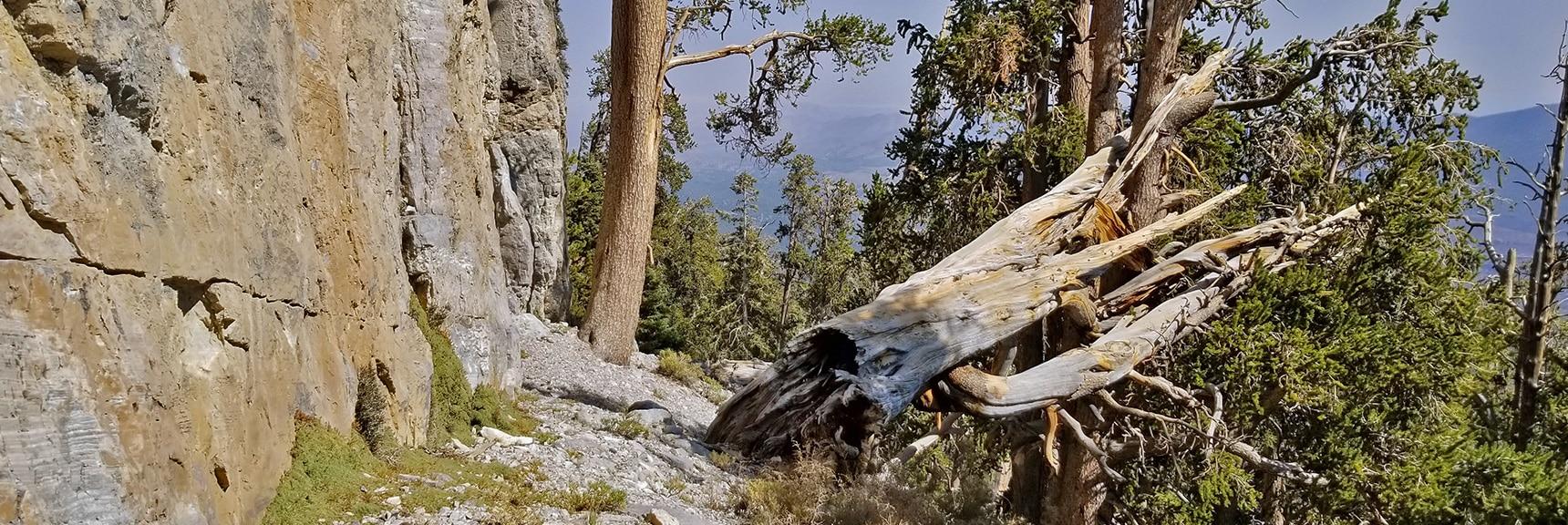 Skirting the Base of Mummy Mt. Head Cliff   Mummy Mountain's Head, Mt Charleston Wilderness, Spring Mountains, Nevada 027