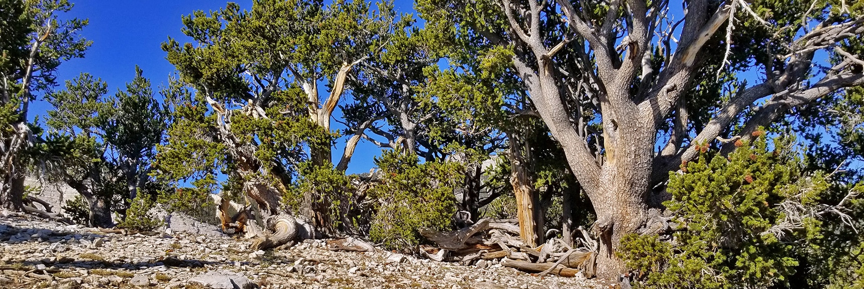 Summit of High Ridge on North Loop Trail | Mummy Springs Loop | Mt. Charleston Wilderness | Spring Mountains, Nevada