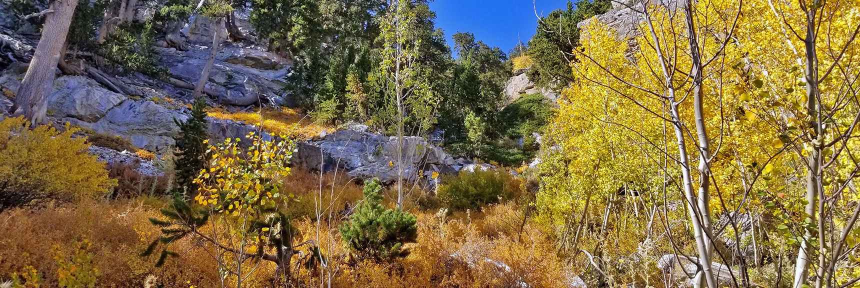 Mummy Springs Early October Fall Colors | Mummy Springs Loop | Mt. Charleston Wilderness | Spring Mountains, Nevada