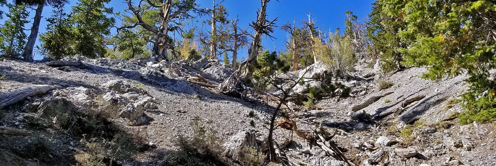 Steep Incline of Cougar Ridge Trail | Mummy Springs Loop | Mt. Charleston Wilderness | Spring Mountains, Nevada