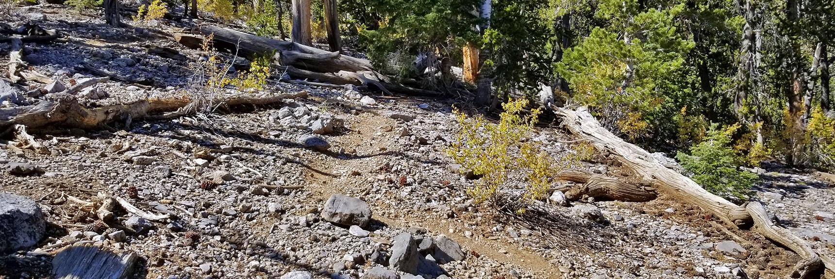 Upper Cougar Ridge Trail in Excellent Condition | Mummy Springs Loop | Mt. Charleston Wilderness | Spring Mountains, Nevada