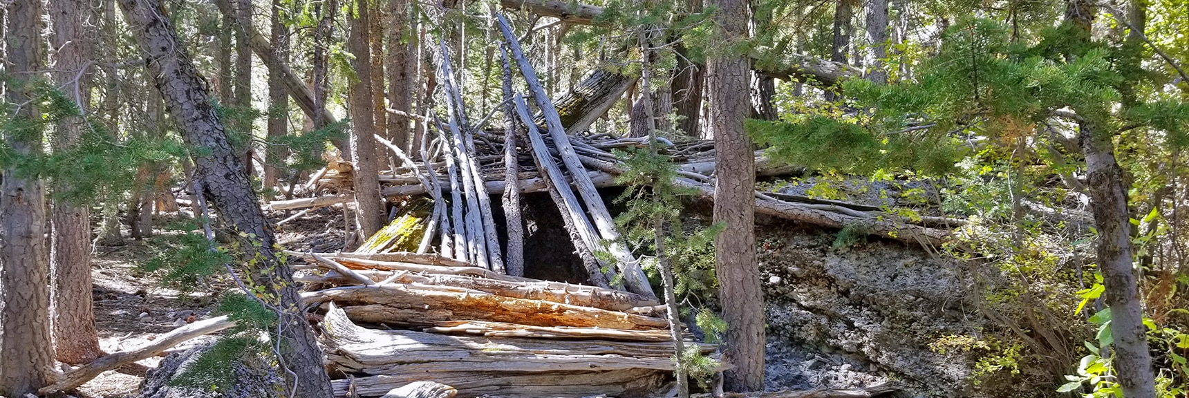 Makeshift Shelter In Lower Cougar Ridge Trail Forest | Mummy Springs Loop | Mt. Charleston Wilderness | Spring Mountains, Nevada