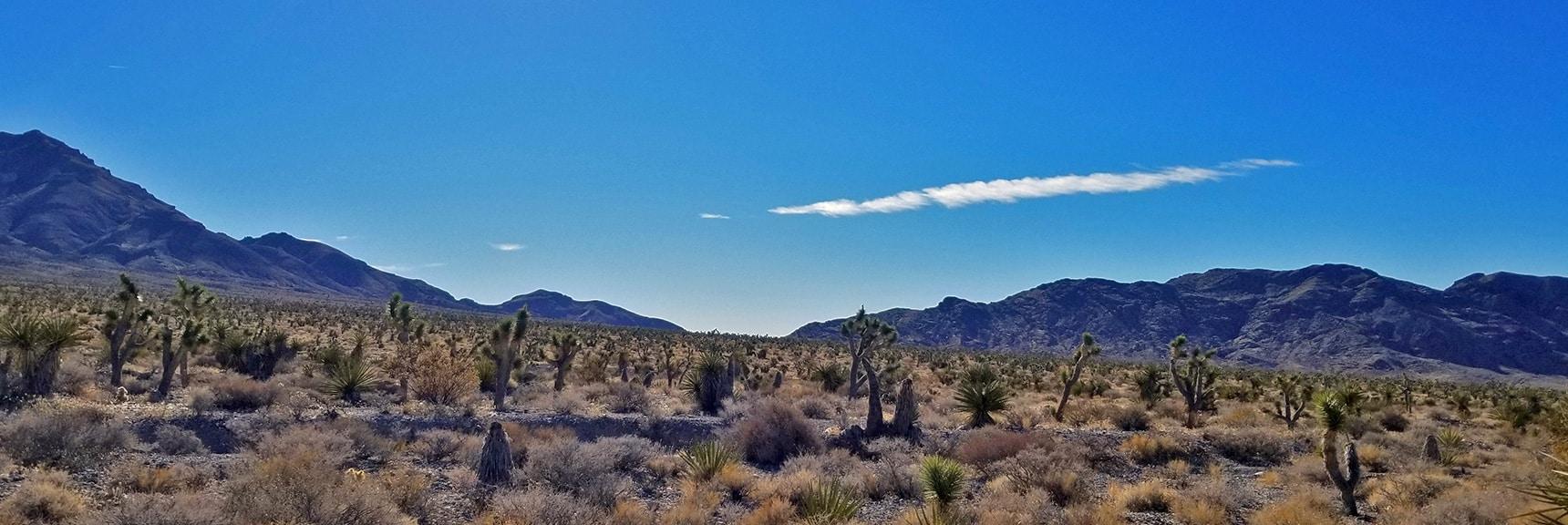 View Toward Eastern Pass of Gass Peak from Gass Peak Road | Gass Peak Road Circuit | Desert National Wildlife Refuge | Nevada