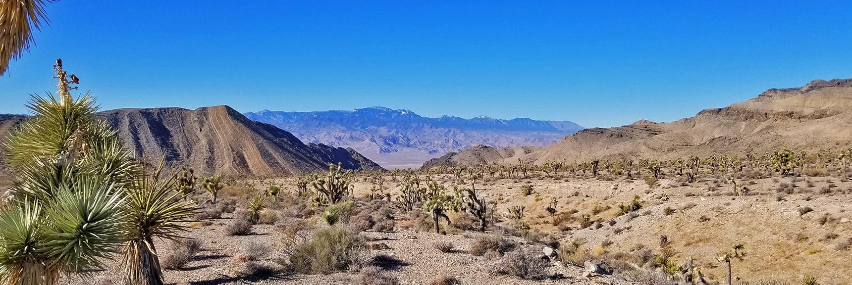 View Through Yucca Gap to Mt. Charleston Wilderness   Lower Mormon Well Road   Sheep Range, Desert National Wildlife Refuge, Nevada