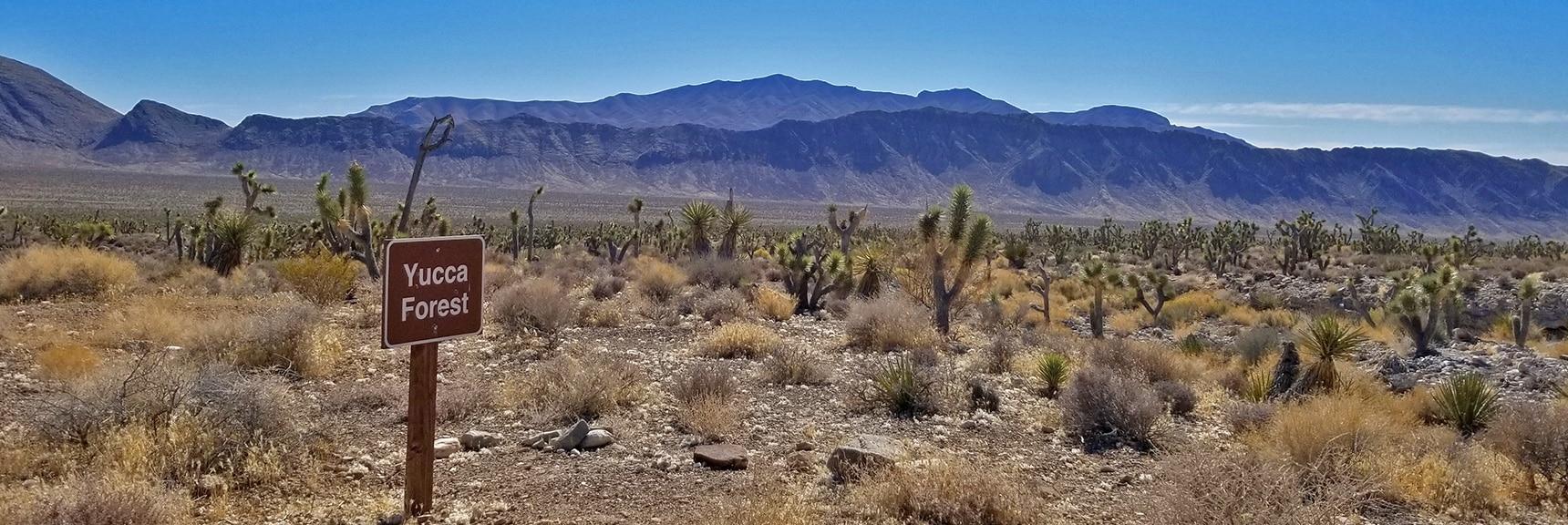 Gass Peak Viewed from Mormon Well Road   Lower Mormon Well Road   Sheep Range, Desert National Wildlife Refuge, Nevada