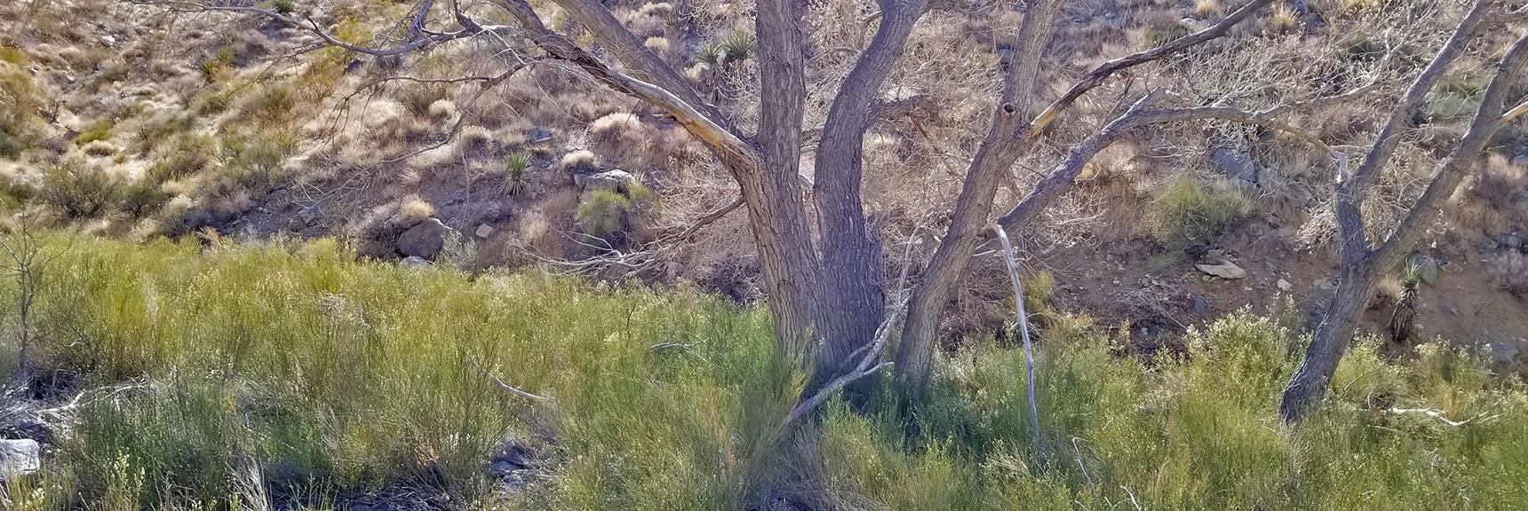 Horse Thief Canyon Springs Area | Mt Wilson, Black Mountains, Arizona, Lake Mead National Recreation Area