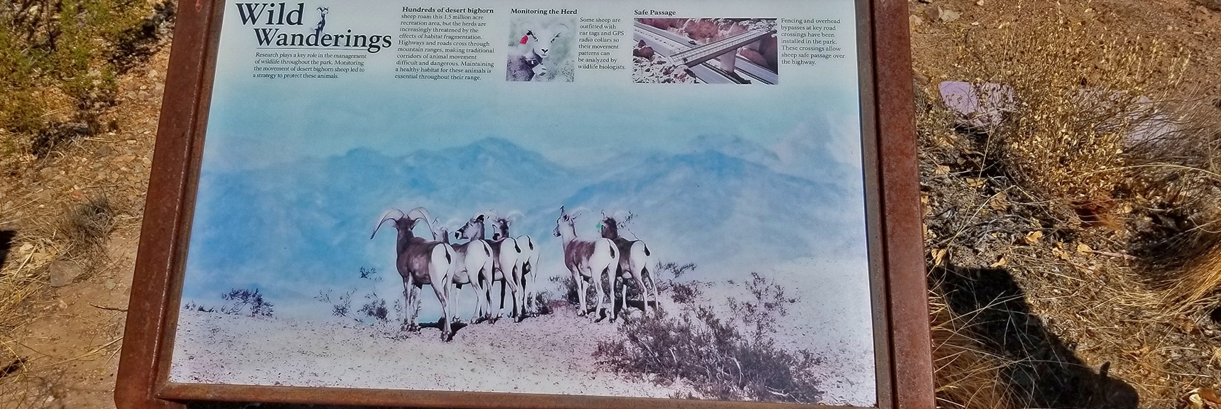 Interpretive Display of Animal Life in the Callville Bay Area   Callville Summit Trail   Lake Mead National Recreation Area, Nevada