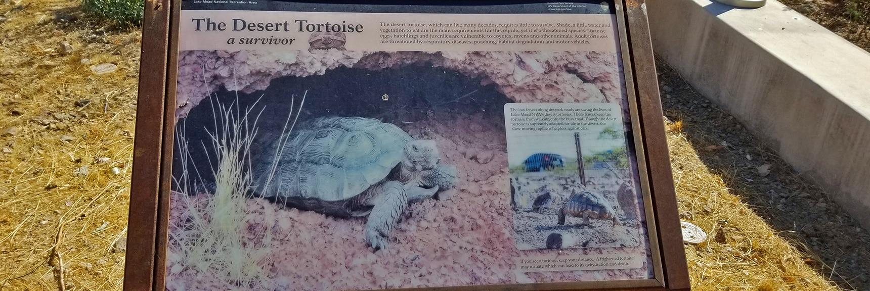 Interpretive Display of Desert Tortoise Life Around the Lake Mead Area   Callville Summit Trail   Lake Mead National Recreation Area, Nevada
