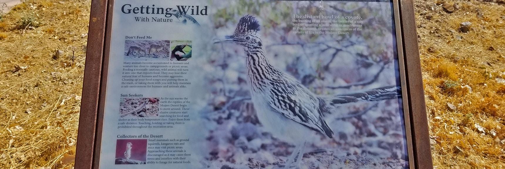 Interpretive Display of Wildlife Around the Callville Bay Area   Callville Summit Trail   Lake Mead National Recreation Area, Nevada