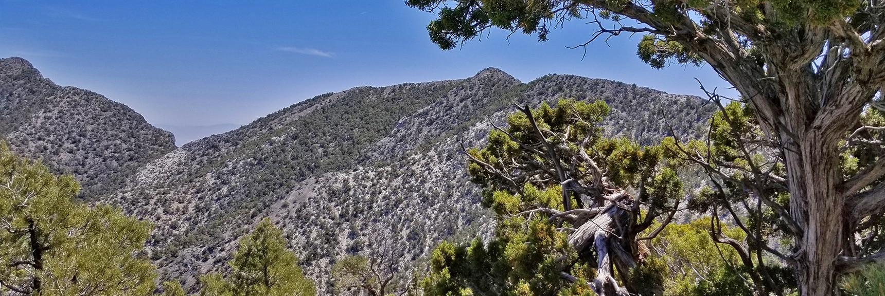 El Padre Mountain | La Madre Mountains Wilderness, Nevada