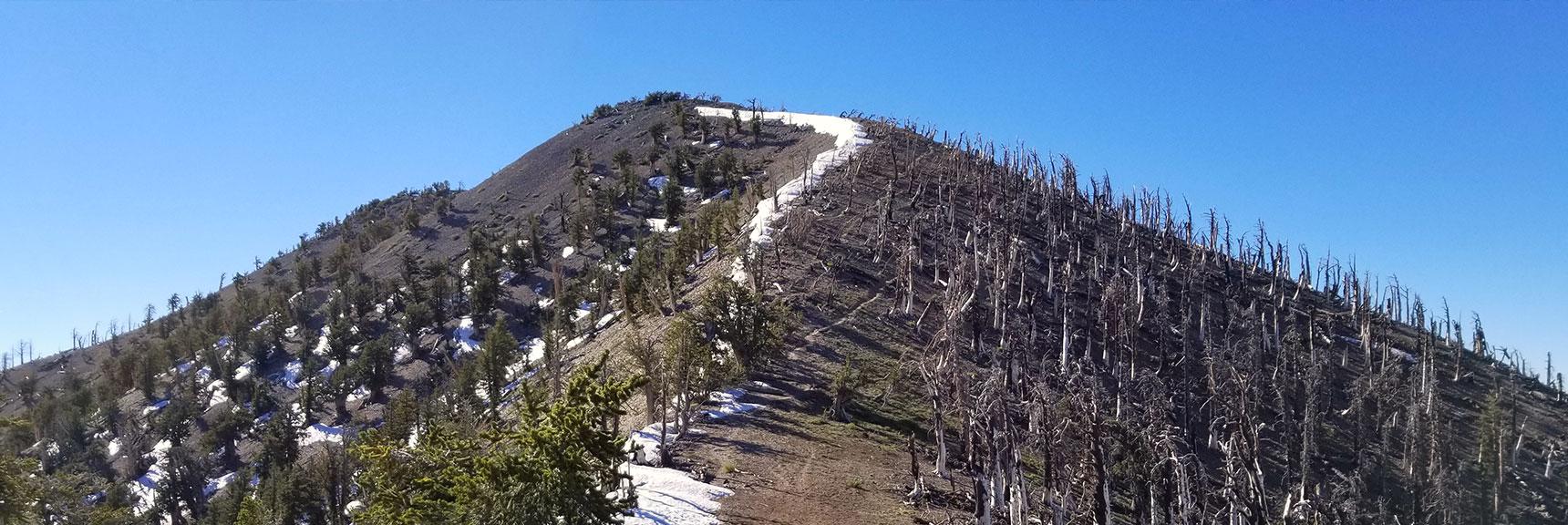 Griffith Peak | Mt Charleston Wilderness | Spring Mountains, Nevada