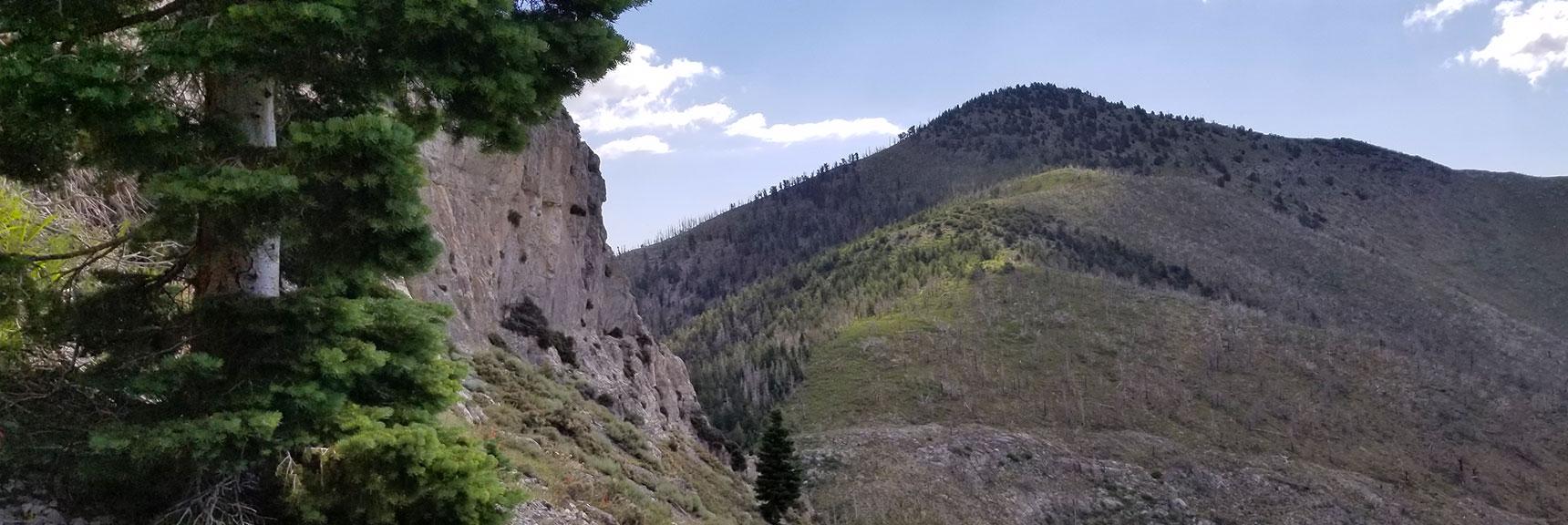 Harris Mt. from S. Climb Tr. | Mt Charleston Wilderness | Spring Mountains, Nevada