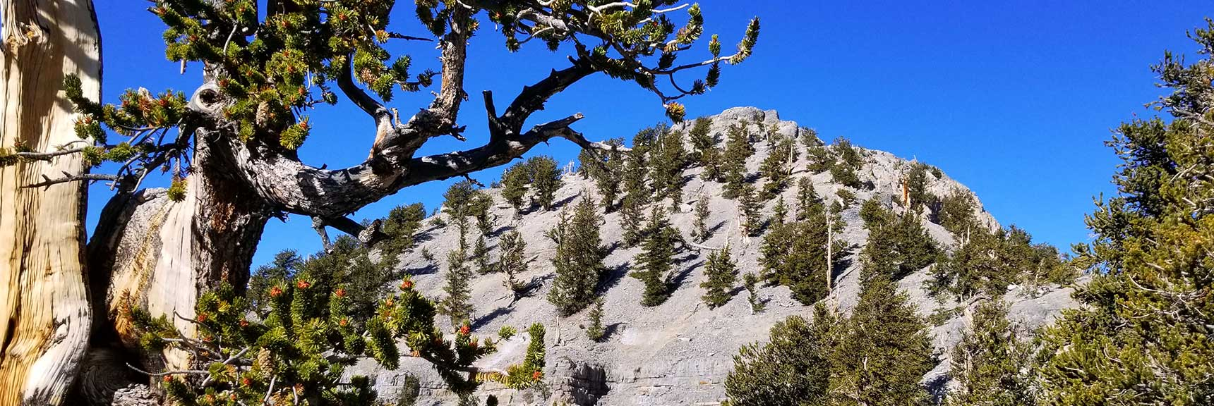 Lee Peak from Kyle Canyon | Mt Charleston Wilderness | Spring Mountains, Nevada