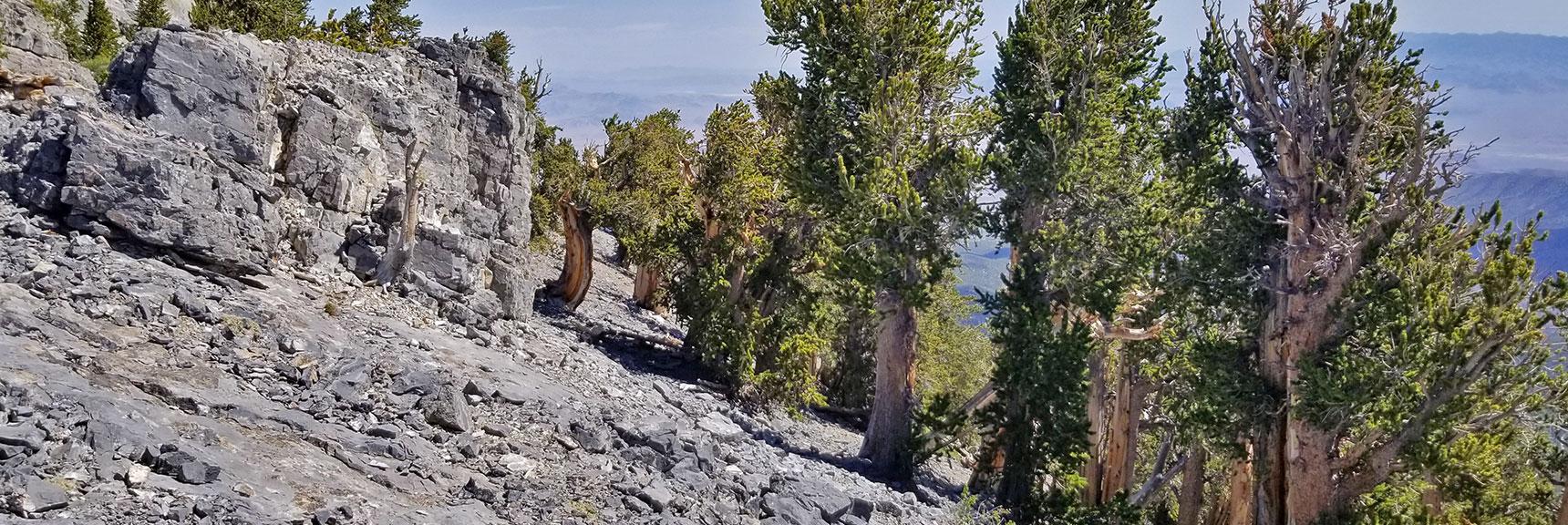 Mummy Mountain's Knees | Mt Charleston Wilderness | Spring Mountains, Nevada