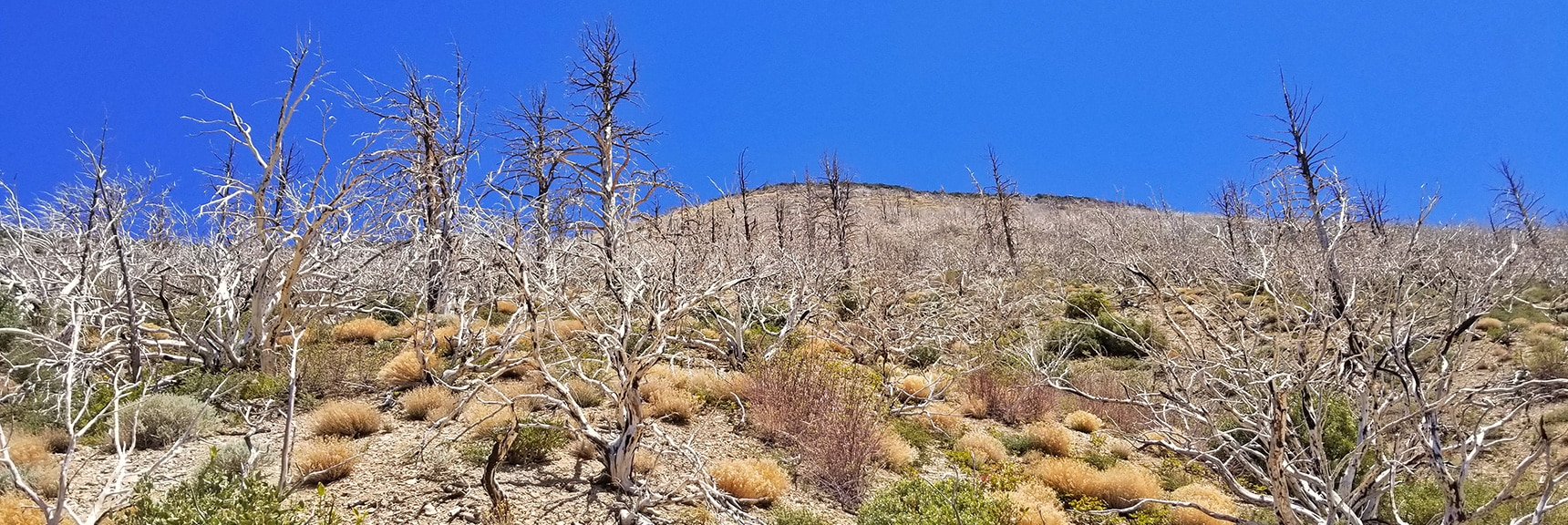 Rising to Ridge Above Wash at 8,300ft, View Toward Harris Mt. | Harris Mountain from Lovell Canyon Nevada