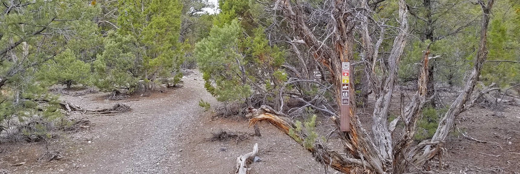 Mud Springs and Sawmill Trails Divide Marker   Sawmill Trail to McFarland Peak   Spring Mountains, Nevada