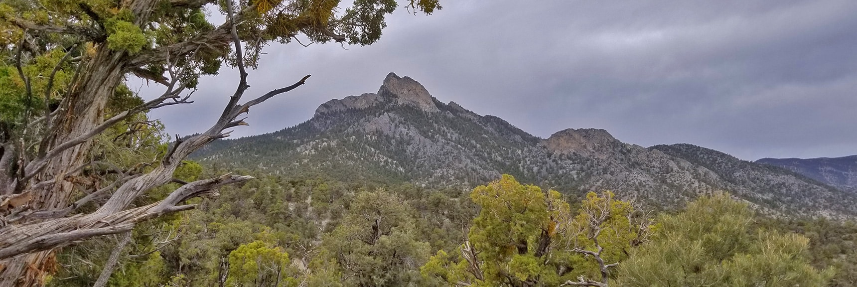 Continuing to Approach McFarland Peak   Sawmill Trail to McFarland Peak   Spring Mountains, Nevada