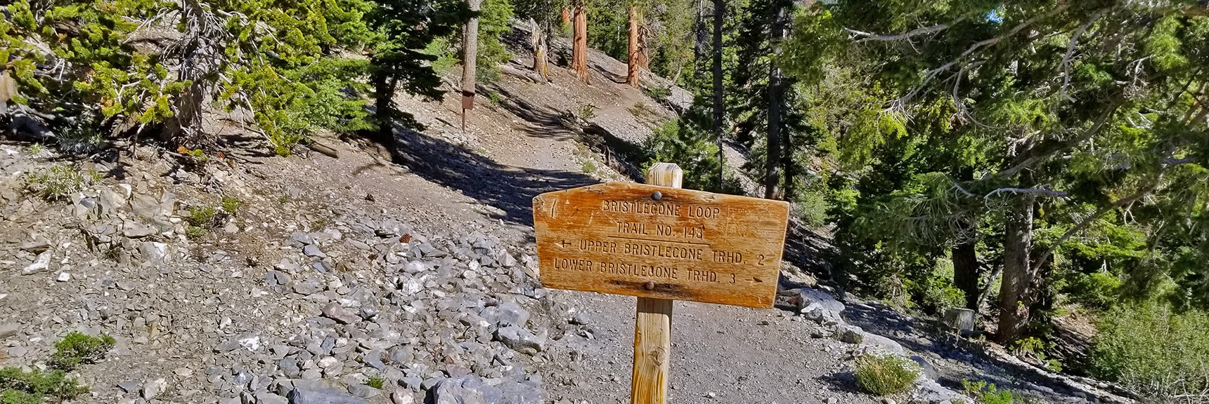 Junction of Bristlecone Pine Trail and Bonanza Trail in Lee Canyon | Base of McFarland Peak via Bristlecone Pine Trail and Bonanza Trail | Lee Canyon | Spring Mountains, Nevada
