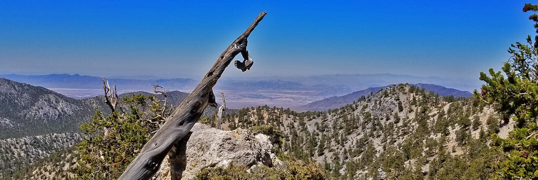 Pahrump Valley with Telescope Peak Faint in Far Background to Right of Branch | Base of McFarland Peak via Bristlecone Pine Trail and Bonanza Trail | Lee Canyon | Spring Mountains, Nevada