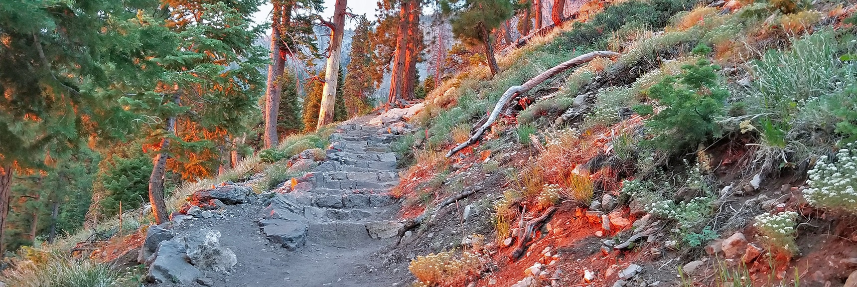 Starting Out on the South Loop Trail from Cathedral Rock at Sunrise | Sexton Ridge Descent from Griffith Peak, Mt. Charleston Wilderness, Spring Mountains, Nevada