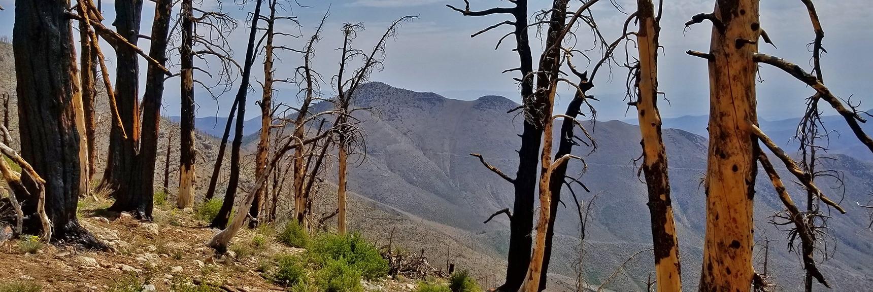 Harris Mountain Viewed from About 1,500ft Below Griffith Peak on Sexton Ridge. | Sexton Ridge Descent from Griffith Peak, Mt. Charleston Wilderness, Spring Mountains, Nevada