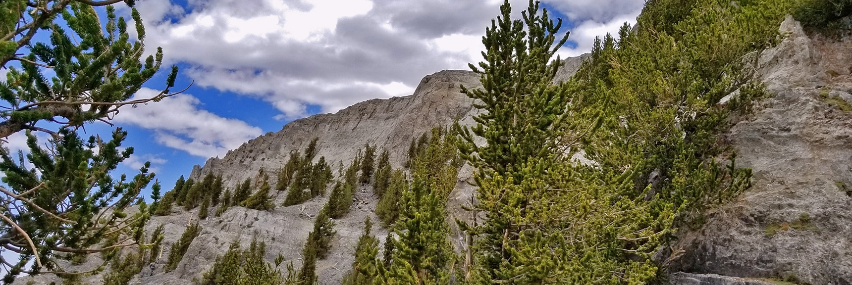 Total Solitude in the Spot. Nobody Comes Here Even on the Busiest Days. | Mummy Mountain NW Cliffs | Mt Charleston Wilderness | Spring Mountains, Nevada