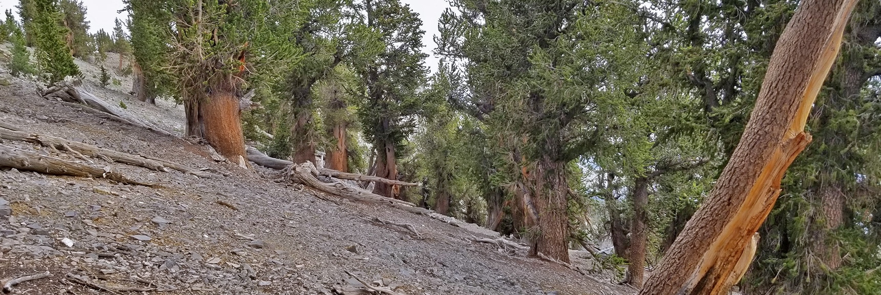 Searching for the Location of the NE Cliff Chute Entrance | Mummy Mountain NE Cliffs Descent | Mt Charleston Wilderness | Spring Mountains, Nevada