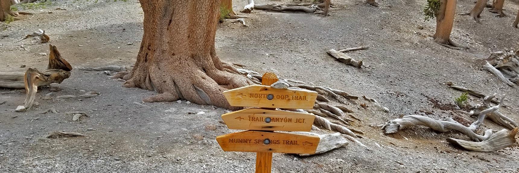 Trail Sign at Raintree | Mummy Mountain NE Cliffs Descent | Mt Charleston Wilderness | Spring Mountains, Nevada