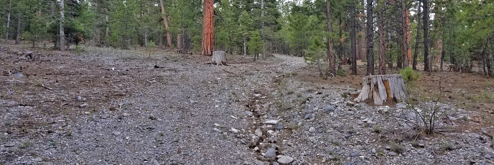 Avalanche Trail Road Becomes 4WD Road Near Approach Wash Base   Mummy Mountain Summit Approach from Lee Canyon   Mt. Charleston Wilderness   Spring Mountains, Nevada