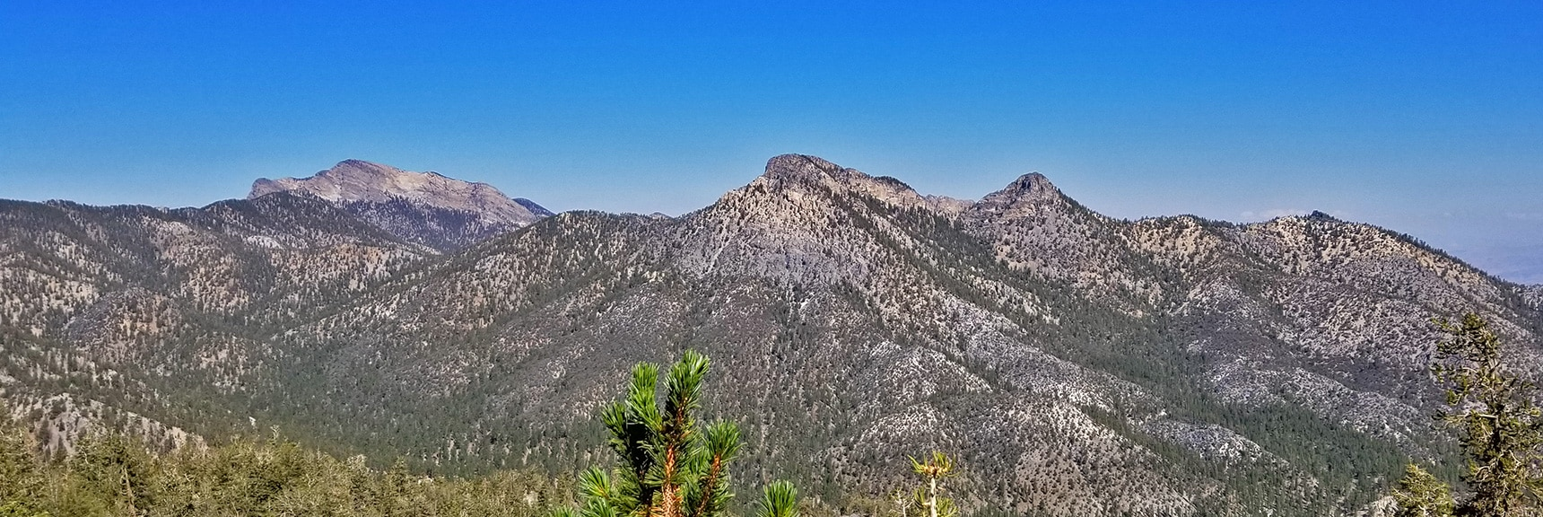 Looking Back Across Lee Canyon to Bonanza Trail Ridge, McFarland Peak and Sisters.   Mummy Mountain Summit Approach from Lee Canyon   Mt. Charleston Wilderness   Spring Mountains, Nevada