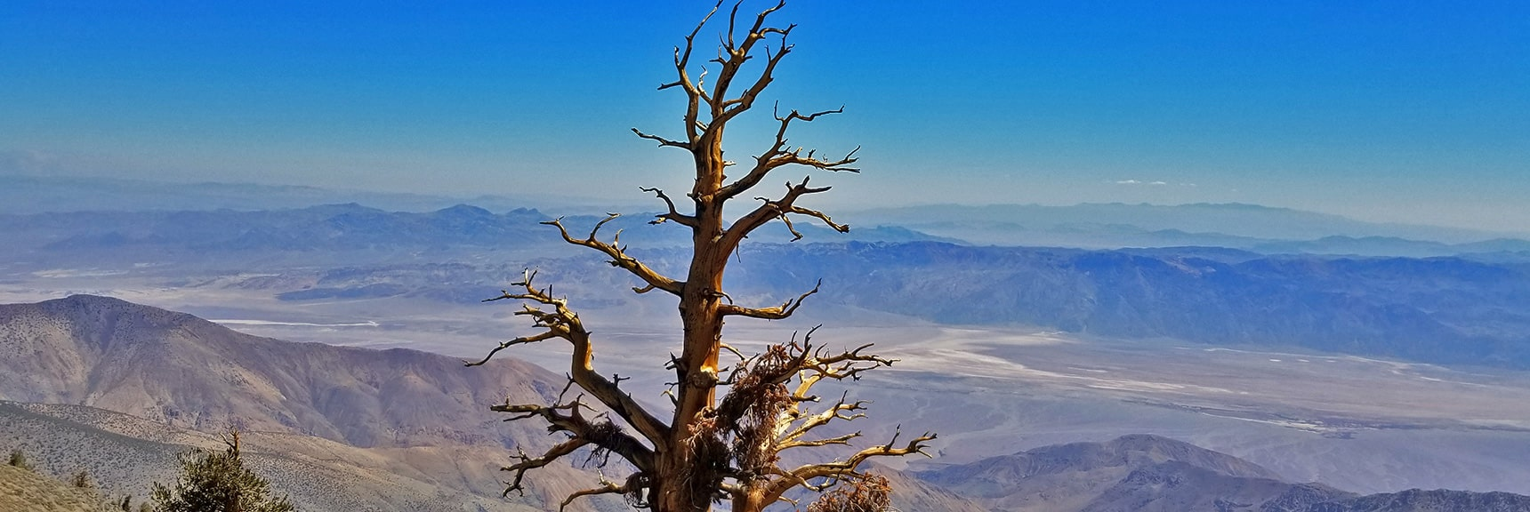 Another View Down to Death Valley Floor. Majestic Bristlecone Pine in Foreground   Telescope Peak Summit from Wildrose Charcoal Kilns Parking Area, Panamint Mountains, Death Valley National Park, California